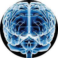 200px-Cerebro